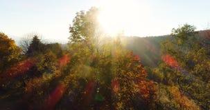 Εναέρια ανατολή άποψης, ηλιοβασίλεμα του δάσους απόθεμα βίντεο