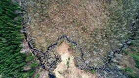 Εναέρια δασική, τοπ άποψη κηφήνων φιλμ μικρού μήκους