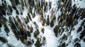 Εναέρια εικόνα των δέντρων πεύκων στο χιόνι, Cortina Δ ` Ampezzo, Ιταλία στοκ φωτογραφία με δικαίωμα ελεύθερης χρήσης