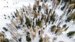 Εναέρια εικόνα των δέντρων πεύκων στο χιόνι, Cortina Δ ` Ampezzo, Ιταλία στοκ εικόνες
