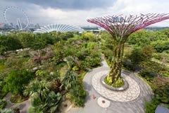 Εναέρια, ευρεία άποψη γωνίας του άλσους Supertree στους κήπους από τον κόλπο με το ιπτάμενο της Σιγκαπούρης στο υπόβαθρο στοκ εικόνες