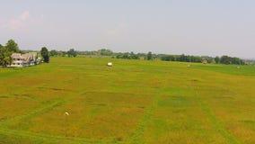 Εναέρια πουλιά άποψης που πετούν τον πυροβολισμό στον τομέα ρυζιού φιλμ μικρού μήκους