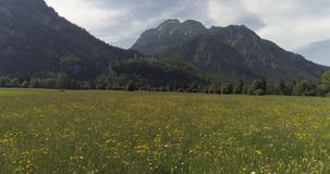 Εναέρια πτήση κηφήνων πέρα από τον πράσινο τομέα χλόης με τα λουλούδια απόθεμα βίντεο