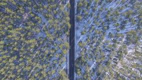 Εναέρια τηλεοπτική άποψη του δάσους το χειμώνα Τοπίο φιλμ μικρού μήκους