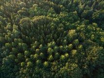 Εναέρια τοπ άποψη άποψης των πράσινων δέντρων πιό forrest Στοκ εικόνα με δικαίωμα ελεύθερης χρήσης