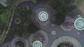 Εναέρια τοπ άποψη για το άλσος Supertree στους κήπους από τις άμμους κόλπων μαρινών στη Σιγκαπούρη πλάνο Φωτισμένος, όμορφος, ζωη φιλμ μικρού μήκους