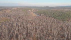Εναέρια τοπ άποψη της εθνικής οδού μέσω των τομέων και των δασών το καλοκαίρι συνδετήρας Τοπ άποψη της δασικής περιοχής με το δρό απόθεμα βίντεο
