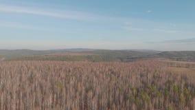 Εναέρια τοπ άποψη της εθνικής οδού μέσω των τομέων και των δασών το καλοκαίρι συνδετήρας Τοπ άποψη της δασικής περιοχής με το δρό φιλμ μικρού μήκους
