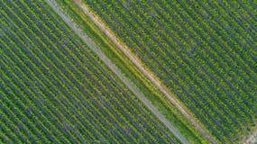 Εναέρια τοπ άποψη του υποβάθρου τοπίων αμπελώνων άνωθεν, Γαλλία Στοκ Εικόνες
