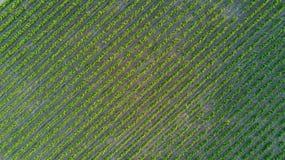 Εναέρια τοπ άποψη του υποβάθρου τοπίων αμπελώνων άνωθεν, Γαλλία Στοκ φωτογραφίες με δικαίωμα ελεύθερης χρήσης