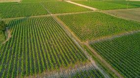 Εναέρια τοπ άποψη του υποβάθρου τοπίων αμπελώνων άνωθεν, Γαλλία Στοκ Εικόνα