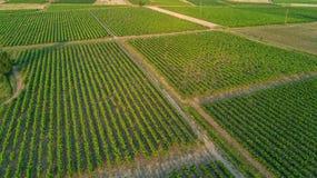 Εναέρια τοπ άποψη του υποβάθρου τοπίων αμπελώνων άνωθεν, Γαλλία Στοκ Φωτογραφίες