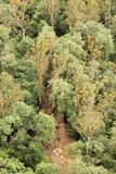 Εναέρια φωτογραφία μιας θέσης για κατασκήνωση μεταξύ των πράσινων δέντρων Στοκ εικόνες με δικαίωμα ελεύθερης χρήσης
