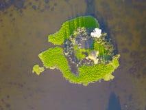 Εναέρια χλόη καλάμων υγρότοπων λιμνών άποψης Στοκ φωτογραφίες με δικαίωμα ελεύθερης χρήσης