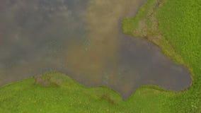 εναέρια όψη Η λίμνη που απεικονίζει το δάσος και τα σύννεφα Πέταγμα πέρα από τη λίμνη στο copter φιλμ μικρού μήκους