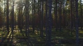 εναέρια όψη Πέταγμα πέρα από τα όμορφα δέντρα φθινοπώρου στο δάσος απόθεμα βίντεο