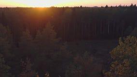 εναέρια όψη Πέταγμα πέρα από τα όμορφα δέντρα φθινοπώρου στο δάσος φιλμ μικρού μήκους