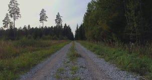 εναέρια όψη Πέταγμα πέρα από τα όμορφα δέντρα φθινοπώρου στο δασικό εναέριο πυροβολισμό καμερών απόθεμα βίντεο