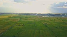 Εναέριοι τομείς ρυζιού άποψης πανοραμικοί όμορφοι πράσινοι φιλμ μικρού μήκους