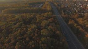 Εναέριοι όμορφοι δάσος και δρόμος φθινοπώρου απόθεμα βίντεο