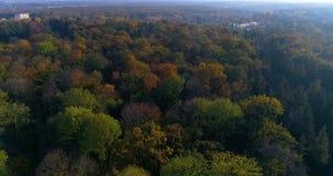 Εναέριος ήλιος φθινοπώρου πάρκων δασικός απόθεμα βίντεο