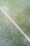 εναέριος αμπελώνας όψης Στοκ Εικόνες