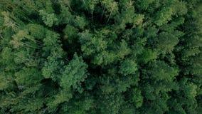 Εναέριος κηφήνας που βλασταίνεται πέρα από το δασικό κηφήνα που αιωρείται επάνω από τα δέντρα απόθεμα βίντεο