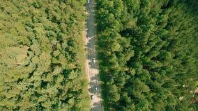 Εναέριος κηφήνας που πυροβολείται πέρα από το δασικό δρόμο Κηφήνας που αιωρείται επάνω από το δρόμο, αυτοκίνητα απόθεμα βίντεο
