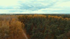 Εναέριος κηφήνας που πυροβολείται πέρα από το ευρωπαϊκό δάσος φθινοπώρου απόθεμα βίντεο