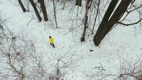 Εναέριος παν πυροβολισμός του αρσενικού δρομέα στην κίτρινη κατάρτιση παλτών στο δάσος τη χειμερινή ημέρα απόθεμα βίντεο
