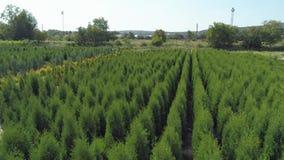 Εναέριος πυροβολισμός: Αγροβιομηχανικός σύνθετος Κήπος βλάστησης δέντρων Thuja φιλμ μικρού μήκους