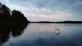 Εναέριος πυροβολισμός βραδιού νύχτας seagulls που κυνηγούν στον ποταμό - πέταγμα πολύ χαμηλό στο νερό για να κρατήσει τα πουλιά π απόθεμα βίντεο