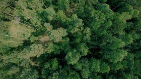 Εναέριος πυροβολισμός κηφήνων πέρα από τις δασικές μύγες κηφήνων προς τα εμπρός επάνω από τα δέντρα απόθεμα βίντεο