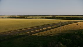 Εναέριος πυροβολισμός τοπ άποψης του πράσινου τομέα με τη χλόη και τα δέντρα Σιτάρι-τομέας και ξύλινος εναέριος βλαστός απόθεμα βίντεο