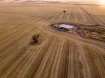 Εναέριος πυροβολισμός των ξηρών καφετιών σχεδίων γεωργικής γης και συγκομιδών με το δέντρο και το φράγμα στοκ εικόνες