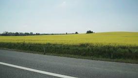 Εναέριος πυροβολισμός του γκρίζου Drive αυτοκινήτων στο δρόμο δίπλα στον τομέα των κίτρινων λουλουδιών και του καλλιεργήσιμου εδά απόθεμα βίντεο