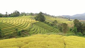 Εναέριος τομέας ορυζώνα ρυζιού βημάτων άποψης χρυσός σε Chiangmai, Ταϊλάνδη φιλμ μικρού μήκους