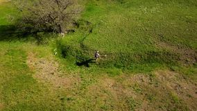 Εναέριο βίντεο του ατόμου που περπατά στη γραφική κοιλάδα στην πράσινη χλόη προς έναν ποταμό Ακολουθώντας πυροβολισμός κηφήνων το απόθεμα βίντεο