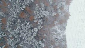 Εναέριο δάσος φθινοπώρου άποψης απόθεμα βίντεο