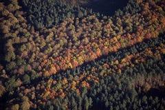 εναέριο δάσος sherwood Στοκ Φωτογραφίες