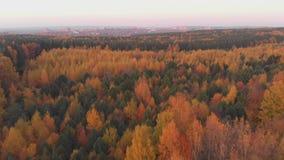Εναέριο ζωηρόχρωμο δάσος φθινοπώρου με τα κίτρινα πορτοκαλιά πράσινα δέντρα απόθεμα βίντεο