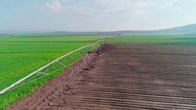Εναέριο μήκος σε πόδηα ενός πράσινου τομέα σίτου στο βόρειο Ισραήλ απόθεμα βίντεο