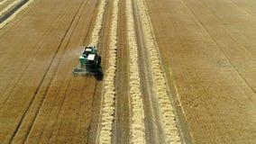 Εναέριο μήκος σε πόδηα κηφήνων Η μπροστινή άποψη συνδυάζει τη θεριστική μηχανή συλλέγει το σίτο Τομέας σιταριού συγκομιδής απόθεμα βίντεο