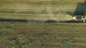 Εναέριο μήκος σε πόδηα κηφήνων Η τοπ άποψη που βλασταίνεται ακόμα Combine της θεριστικής μηχανής συλλέγει το σίτο Τομέας σιταριού φιλμ μικρού μήκους