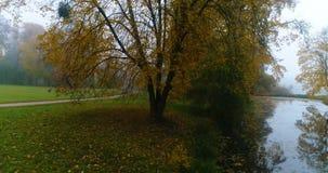 Εναέριο νερό λιμνών λιμνών πορειών ιχνών φθινοπώρου πάρκων δασικό απόθεμα βίντεο