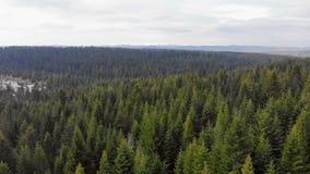 Εναέριο πέταγμα πέρα από ένα δάσος των πράσινων δέντρων Υπόβαθρο των πράσινων δέντρων Μήκος σε πόδηα κηφήνων απόθεμα βίντεο