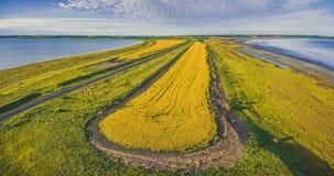 Εναέριο πανόραμα ενός όμορφου κίτρινου τομέα canola Στοκ εικόνες με δικαίωμα ελεύθερης χρήσης