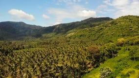 Εναέριο τοπίο νησιών άποψης κηφήνων, φυτείες φοινικών καρύδων, Ταϊλάνδη Φυσική ειδυλλιακή σκηνή παραδείσου Λόφος βουνών απόθεμα βίντεο