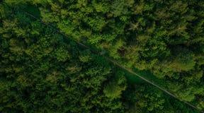 Εναέριο veiw του κενού δρόμου στον πράσινο δασικό πυροβολισμό κηφήνων στοκ φωτογραφία