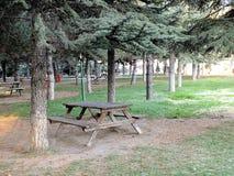 Ενδιαφέροντες και διαφορετικοί τύποι δέντρων, τύποι δέντρων καμπυλών, ενδιαφέρουσες εικόνες δέντρων καμπυλών στοκ εικόνες